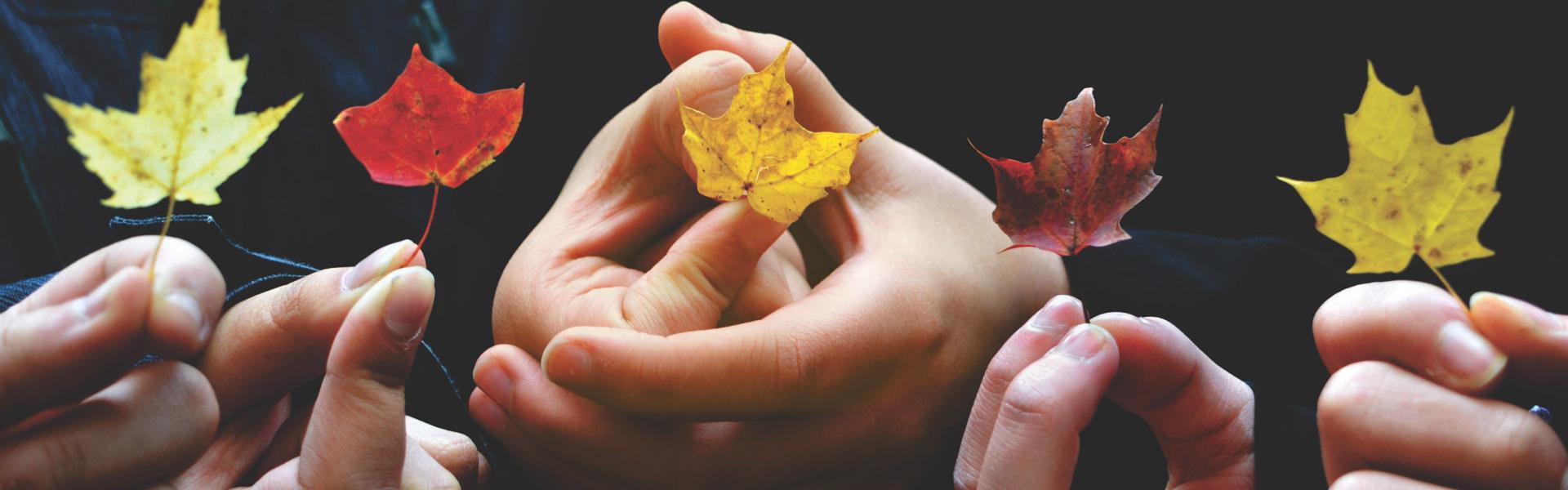 Mains d'enfants tenant des feuilles d'érable jaunes et rouges - bannière pour Jeunesse
