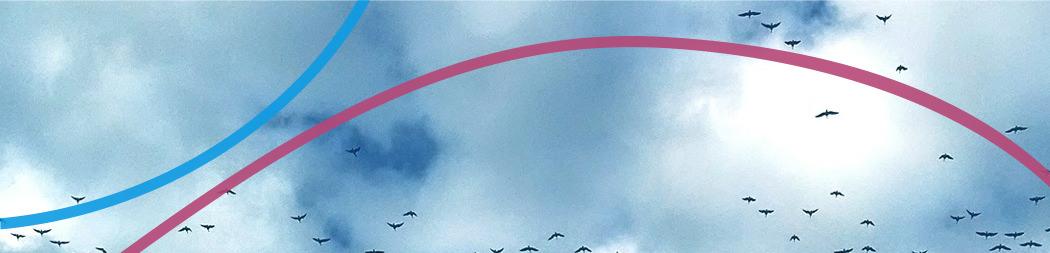 Oiseaux qui volent - bannière pour le programme Rayonner à l'international