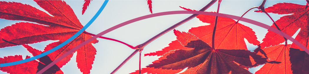 Feuilles d'érable - bannière pour le programme Rayonner au Canada