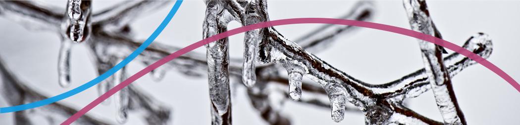 Branches d'arbre recouvertes de glace - bannière pour le programme Appuyer la pratique artistique